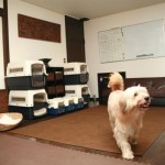 Dog friendly hotels Pooch:Dog room1