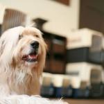 Dog friendly hotels Pooch:Dog room1