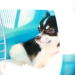 Dog friendly hotels Pooch:Dog room2