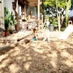 Dog friendly hotels Pooch:Dog run