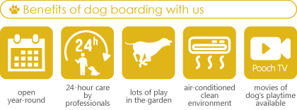 Dog friendly hotels Pooch:Benefits of dog boarding with us