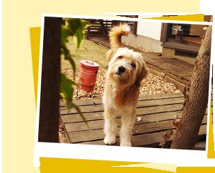 Pooch Dog Daycare