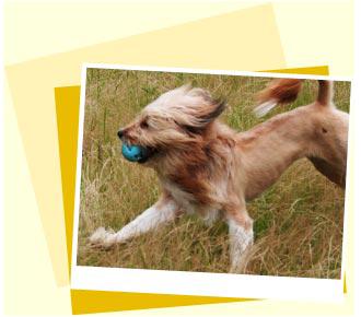Image Dog Diet