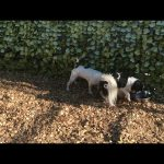 Dog friendly hotels Pooch: